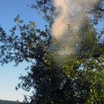 Brennt Baum am 04.10.2016 I